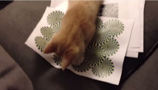 Katten ser en optisk illusion…han reaktion! FANTASTISK!